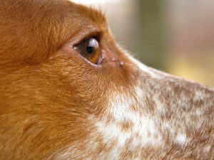 Santa Clarita resident, dogs, lawsuits on behalf or against dogs